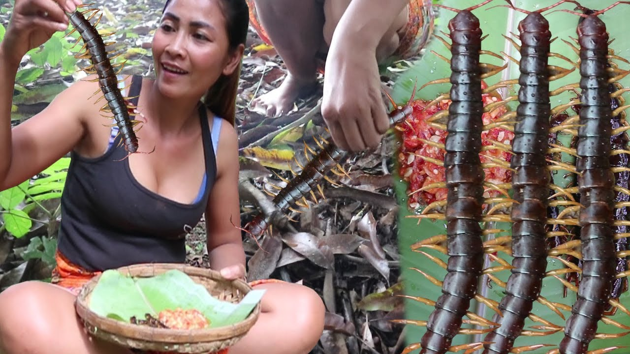 Survival skills: Catch centipede and grilled on clay for food – Cooking centipede eating delicious